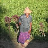Pirinç Tarlası, Bali