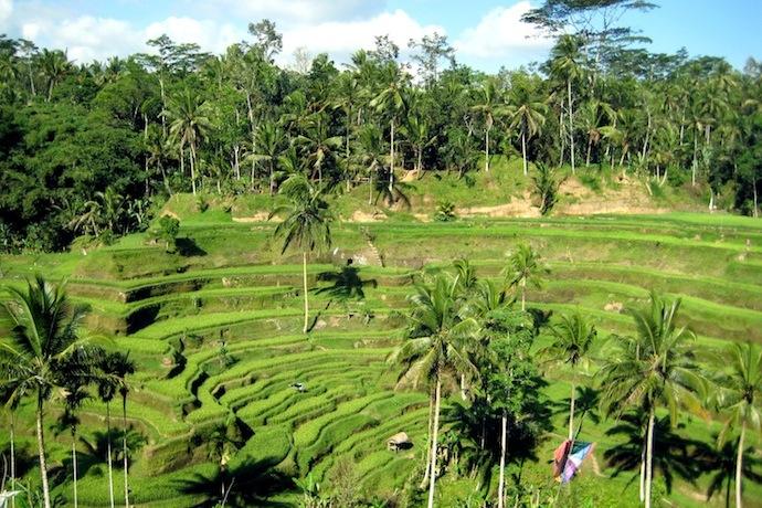Bali : Tanrıların Adası
