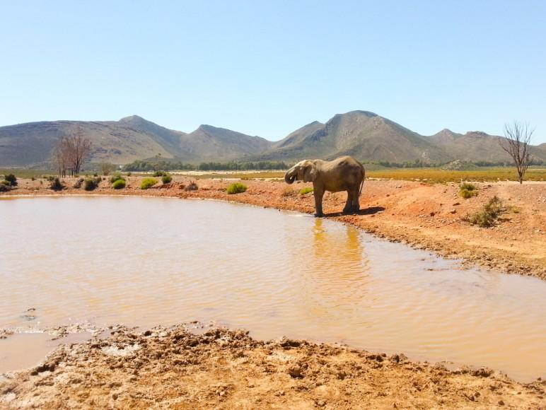 capetown_safari_21_1050