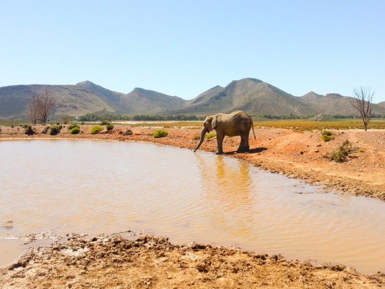 capetown_safari_22_1050