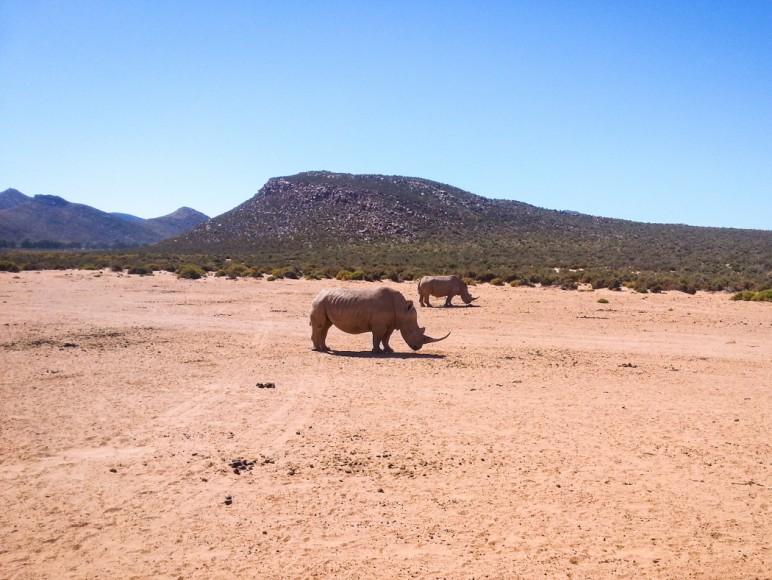 capetown_safari_6_1050